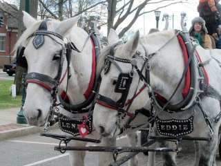 Complimentary horse-drawn hayride sponsored by Liberty Bay Credit Union.